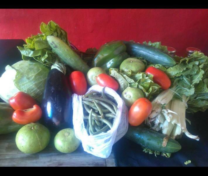 Mercado Territorial: una experiencia de comercialización de frutas y verdudas sin explotación